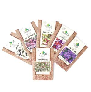Flower Bed Seeds