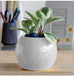 Football Ceramic Pot (5.3 Inch Diameter)