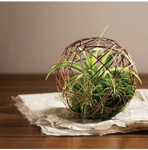 Geo Ball With Hardy Tillandsias Air Plant