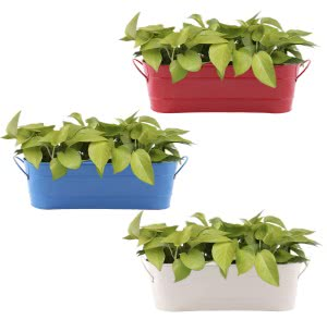 Oval Planter Large - Set of 3 (Red, White, Skyblue)