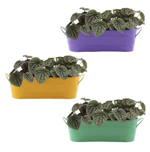 Oval Planter Large - Set of 3 (Light green, Yellow, Purple)