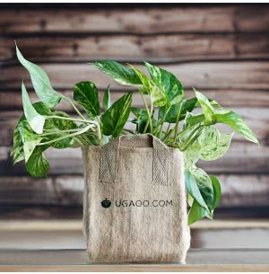 Jute Grow Bags Medium (7 in x 9 in)