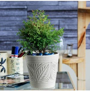 Matte Finish Ceramic Pot With Leaf Groove Pattern - 7.5 Inch