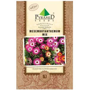 Mesembryanthemum Mix Flower Seeds