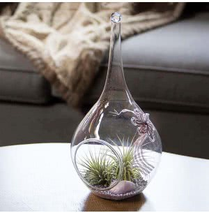 Mother's Bloom Glass Planter With Tillandsia Air Plant