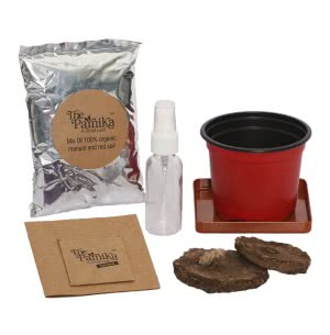 The Parnika - Tulsi Plant Kit
