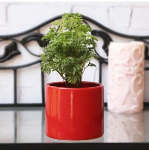 Pipe Ceramic Pot - 3.2 Inch