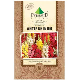Antirrhinum Flower (200 Seeds)