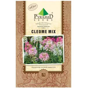 Cleome Mix Seeds