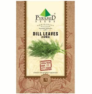 Dill Leaves Seeds (Suwa)