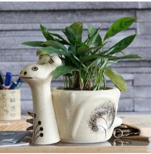 Snail Ceramic Pot- 11 Inch
