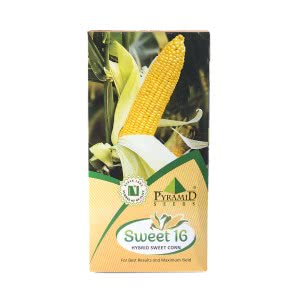 Hybrid Sweetcorn Vegetable Seeds-Sweet-16 - 1 kg