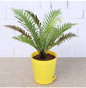 Tree Fern With Self Watering Pot
