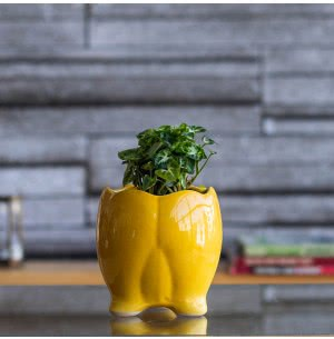 Tusker Yellow Ceramic Pot- 4 Inch