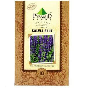 Salvia Blue Seeds