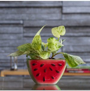 Watermelon Original Color Ceramic Planter- 5.8 Inch