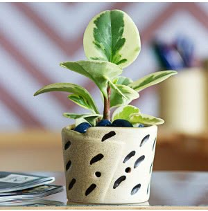 Melon Ceramic Pot (3.6 Inch Diameter)
