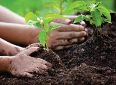 WORLD ENVIRONMENT DAY : IS PLANTING TREE THE ONLY SOLUTION?