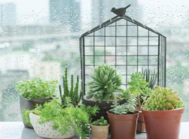 6 SUPER SUCCULENTS FOR WINDOWSILL