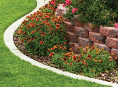 Edging Plants for Garden