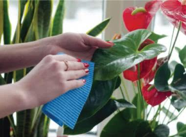 The Secret of Caring for Houseplants Successfully