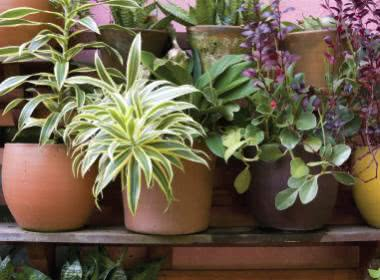 CARING FOR POTTED PLANTS IN SUMMER