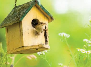 THIS SUMMER LET'S BUILD A BIRDHOUSE