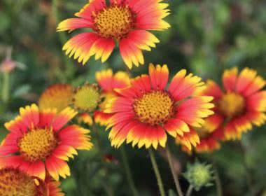 30 SUPERSTAR FLOWERS FOR INDIAN SUMMER GARDEN
