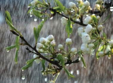 IS YOUR GARDEN MONSOON READY?