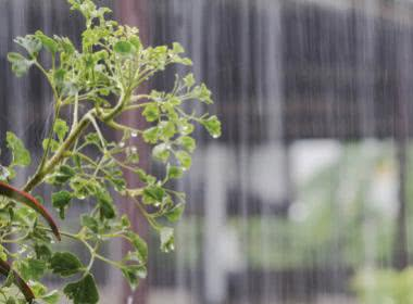 THE EASIEST WAYS TO MAINTAIN A MONSOON GARDEN
