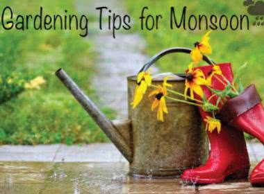 GARDENING TIPS FOR MONSOON