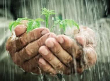 RAINY DAYS: PROTECTING PLANTS FROM HEAVY RAIN