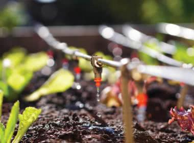 WINTER IS COMING: IS YOUR GARDEN READY?