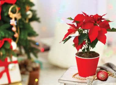 5 WAYS TO DECORATE THE HOUSE THIS CHRISTMAS