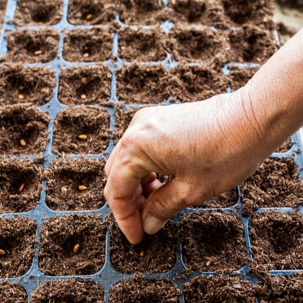 Take a seedling tray with medium sized cells & drainage holes at the