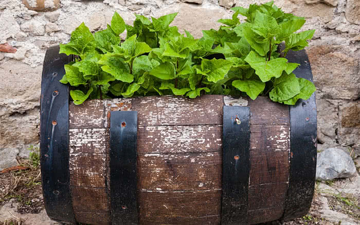Wooden barrel container