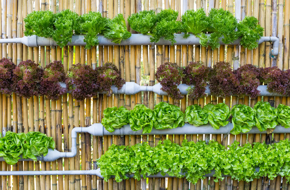 Green wall with vegetable garden