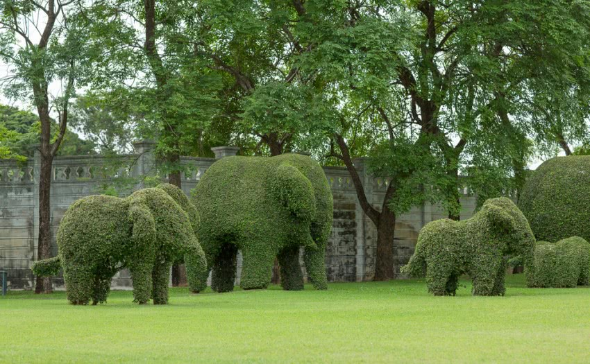 topiary trees in elephant shape