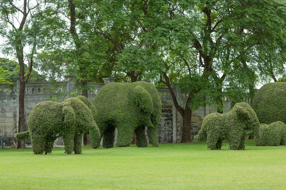 Best topiary plants topiary shapes topiary garden for Garden topiary trees