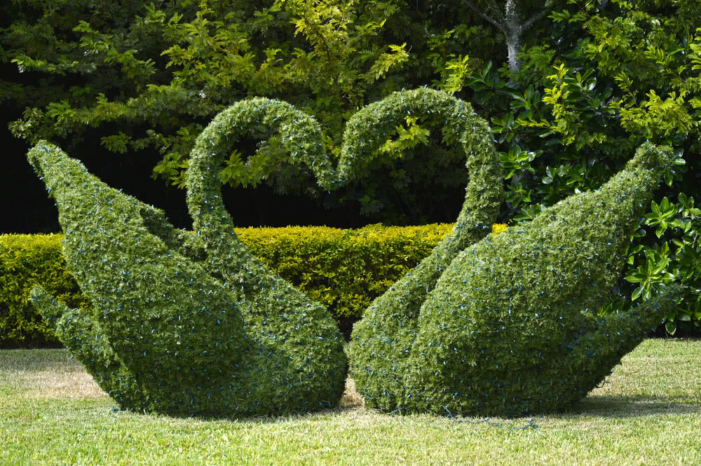 Topiary shaped as two swans making a heart