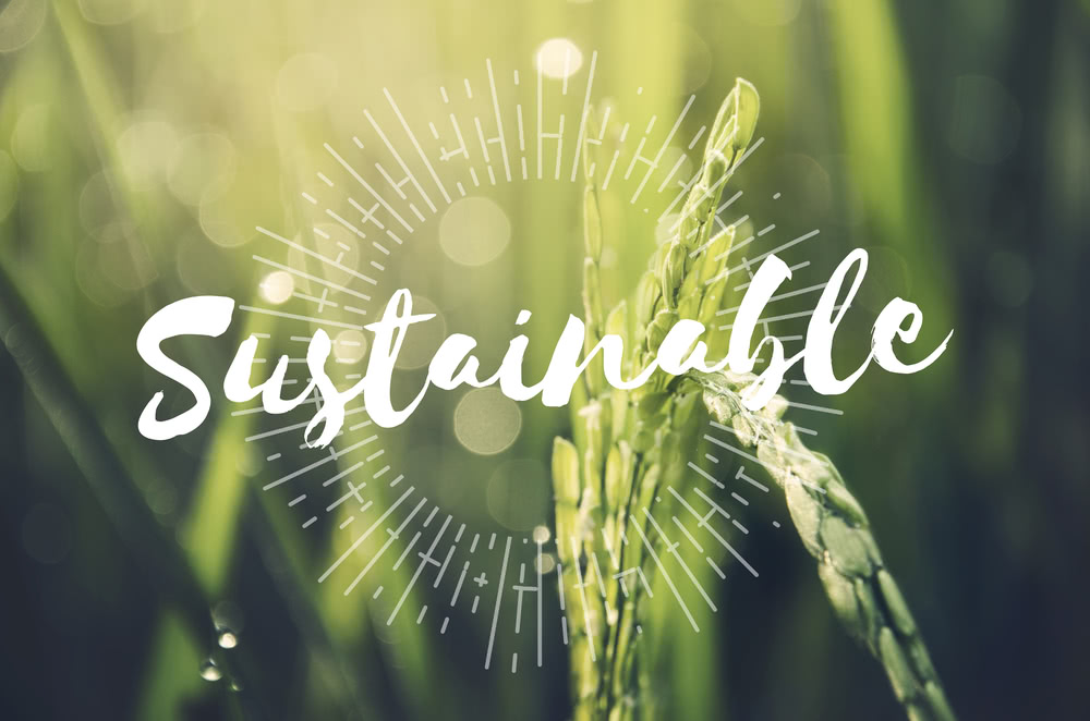 sustainable agriculture in india