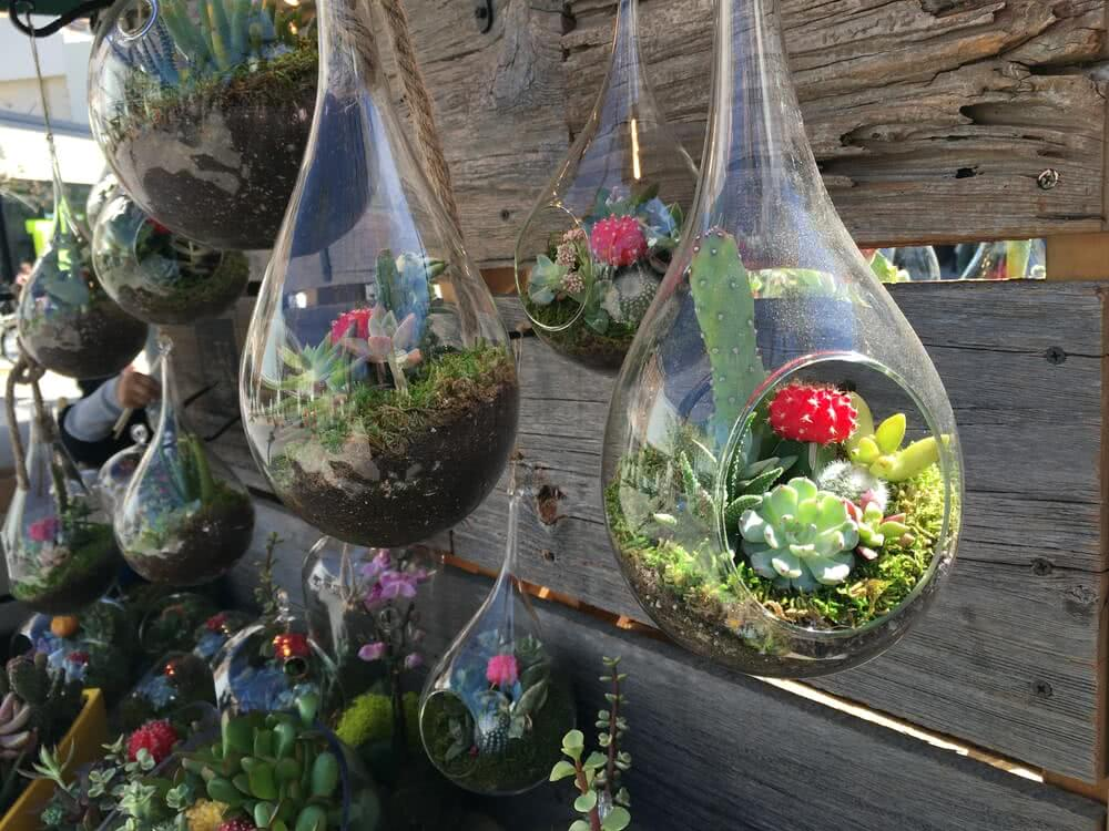 bottle garden plants, plants in bottles, hanging bottle garden
