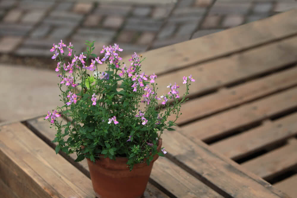 seasonal flowers, potted plants, container gardening