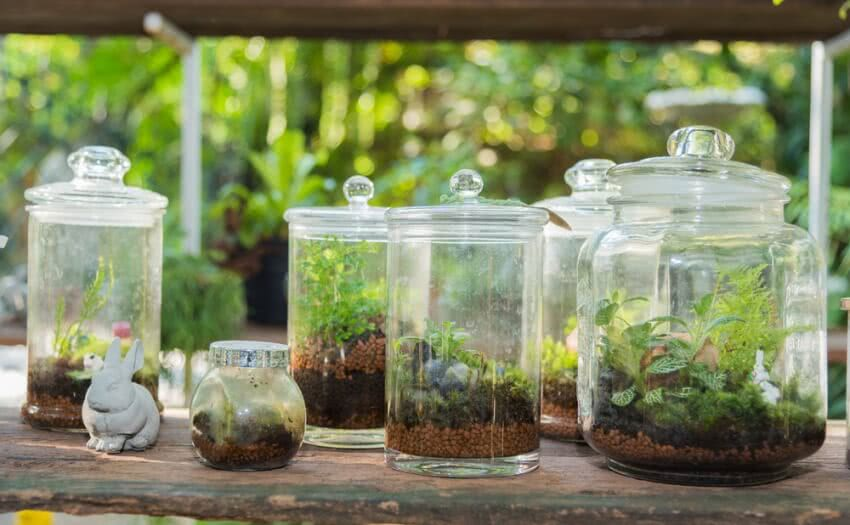 plant in bottle, glass bottle, bottle gardening