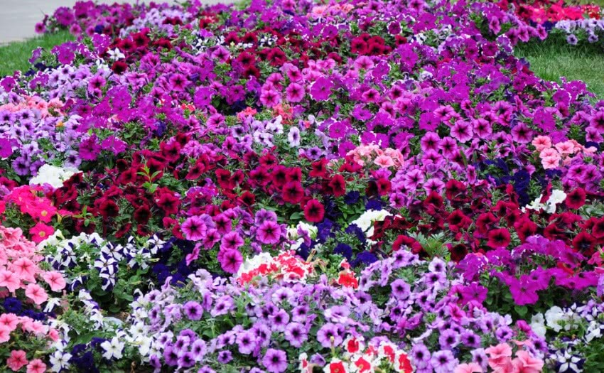 flowering plants, beautiful flowers