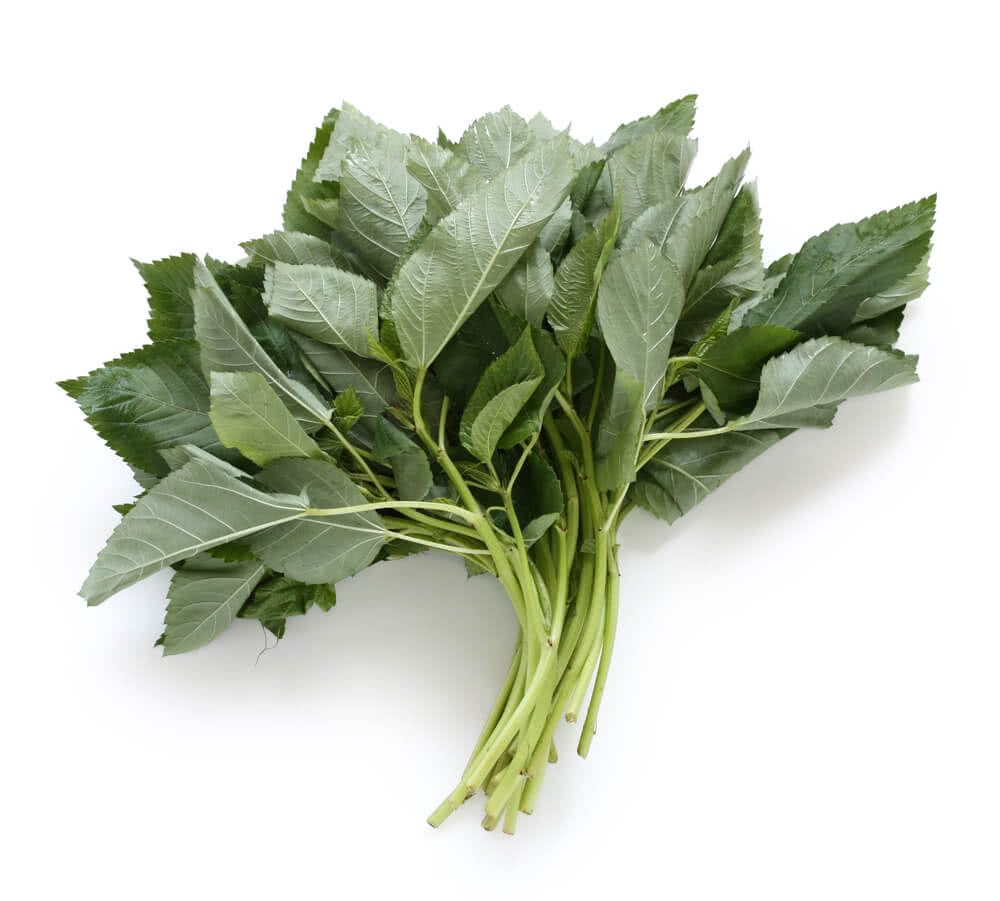 spinach varieties, spinach plant