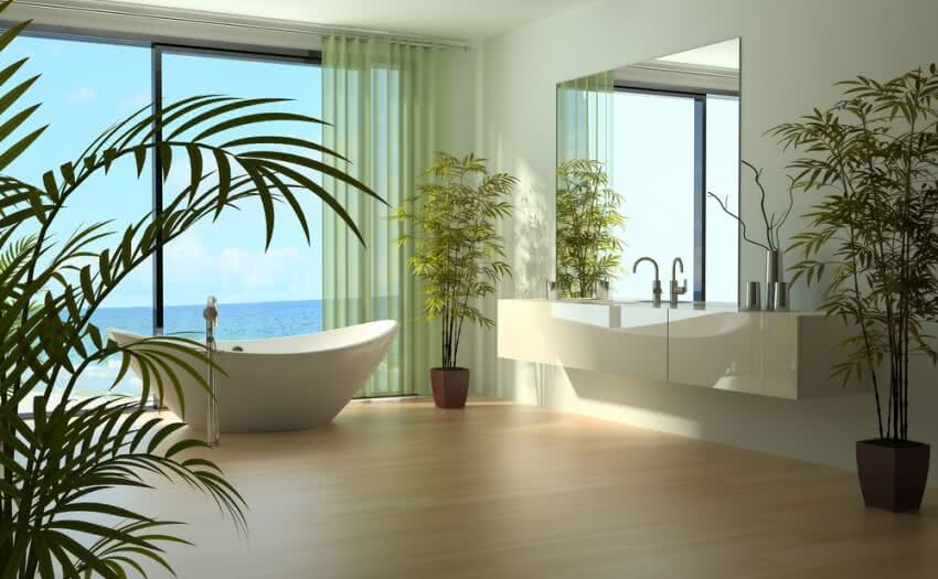 house plants, plants for bathroom