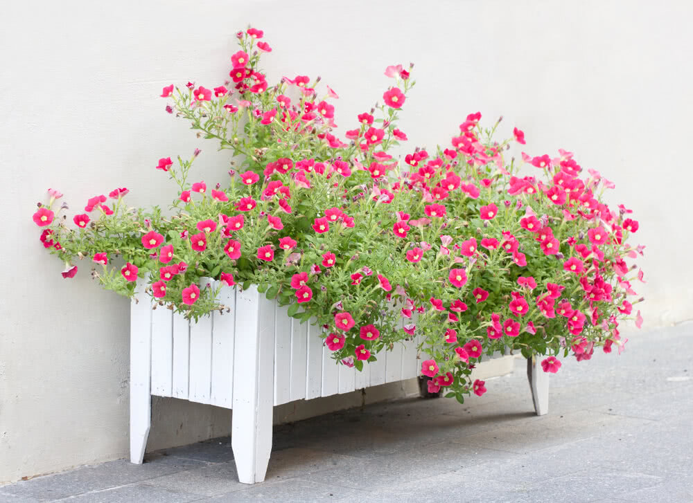 planters, types of containers