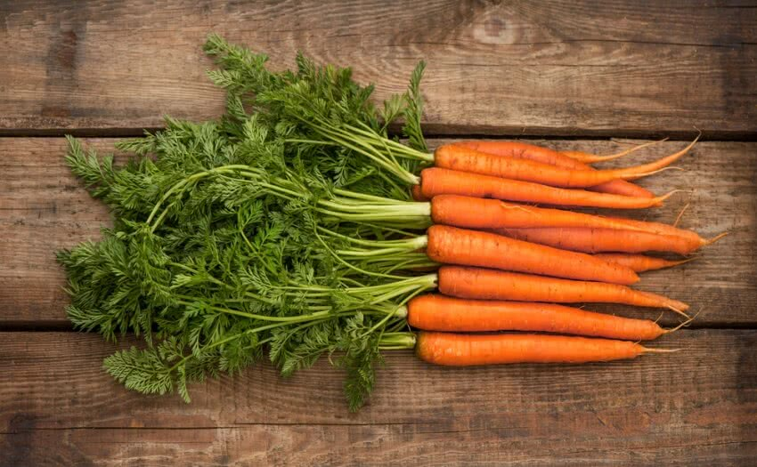 carrots, how to grow carrots, carrot plant, carrot seeds