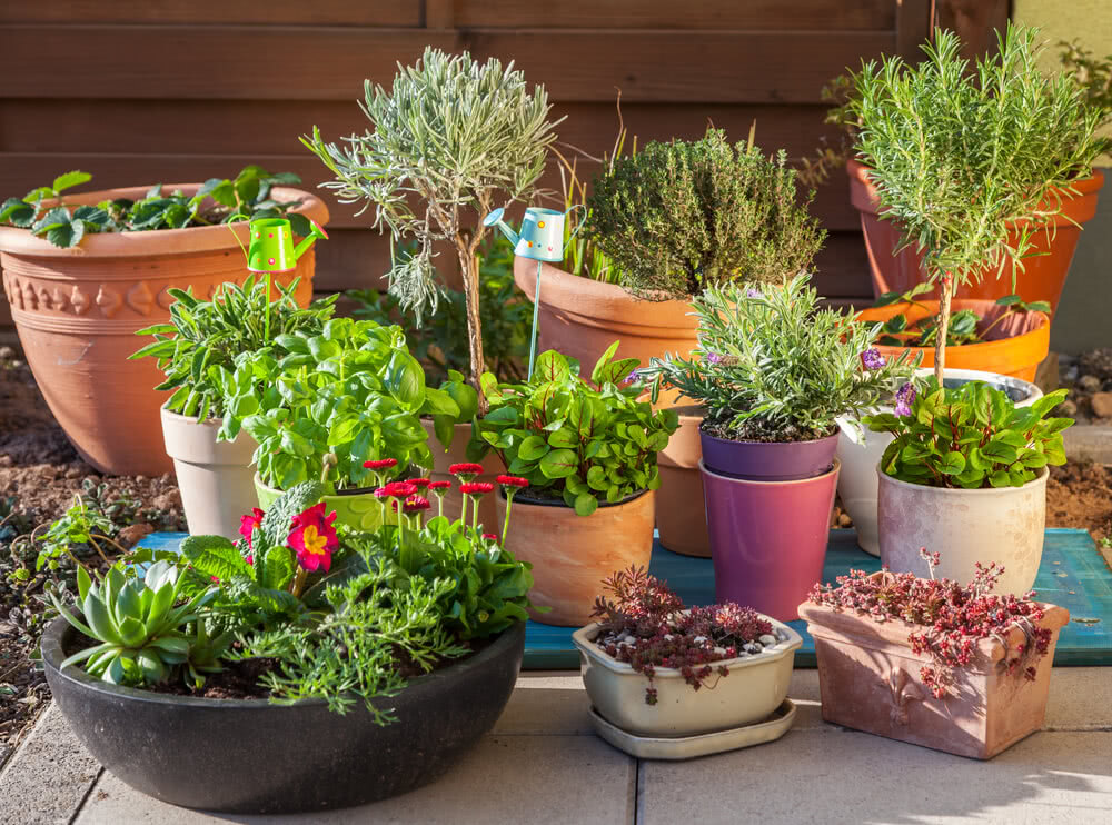 Types of containers for houseplants how to choose - Macetas para interiores ...